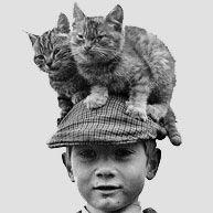I want a cat hat!