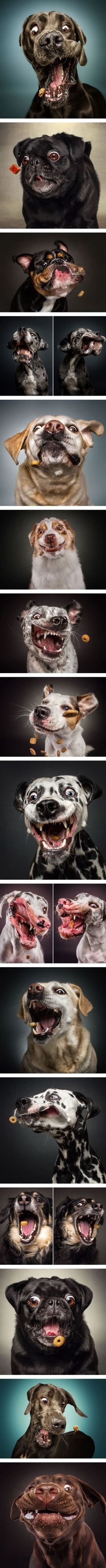 Expressions of Dogs Catching Treats In Mid-Air (By Christian Vieler-Kircher)