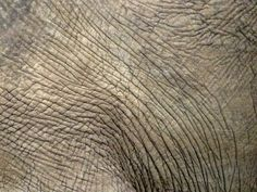 elephant texture, south africa