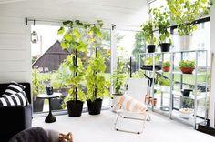 Lakberendezés inspiráció: növények a lakásban - urban:eve