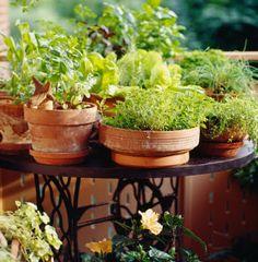 Desperate Gardener: Easy Container Gardening