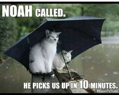 Raining cats but not dogs ( they better not have got an invite to this 'cruise' !!! )