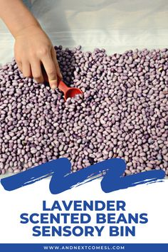 Looking for colored beans sensory play ideas? Check out this simple calming lavender scented beans sensory bin. #sensory #sensoryplay #sensorybin #preschool #toddlers