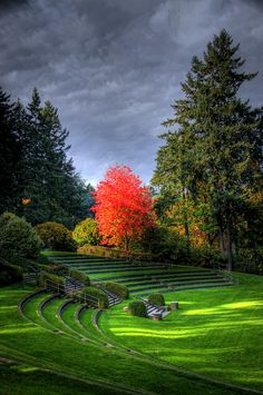 Amphitheater - Forest Park, Portland, Oregon