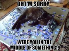 oh-im-sorry-were-you-in-the-middle-of-something.jpg (cat,evil,puzzle)