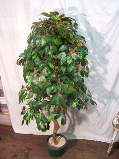 DSCF4655 Plants, Plant, Planets