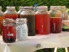 MARTHA HERBA teinture à froid (fermentation)