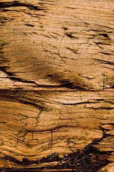 phone screen savers Nine 6 Hardwood Floors, Phone, Tree Structure, Wood Floor Tiles, Wood Flooring, Telephone, Mobile Phones