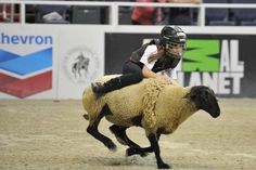 Mutton busting at the Washington International Horse Show (Photo by Diana De Rosa)