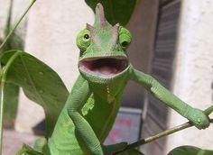 Il arrive parfois que les animaux aient des expressions très similaires aux nôtres. Lorsqu'ils sont étonnés, ils savent nous le faire savoir, à l'image de ces 31animaux qui ont certainement vu quelque chose de vraiment surprenant et que SooCurio...