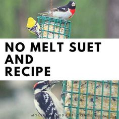 No Melt Suet and Recipe - Make your own suet recipe and watch the birds flock t. - No Melt Suet and Recipe – Make your own suet recipe and watch the birds flock to your feeders. Suet Bird Feeder, Wild Bird Feeders, Humming Bird Feeders, Suet Cake Recipe, Old West, Flock Of Birds, Suet For Birds, Pet Birds, Suet Cakes