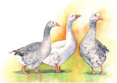 Imprimer des oies d'aquarelle G2215 - A3 impression - art Estampe - oiseau art - sticker impression - impression-art animalier pour pépinière