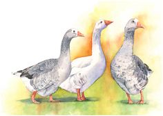 Geese print of watercolor painting G2215  A3 size by LouiseDeMasi