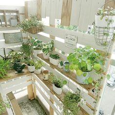 Veranda mini-jardin / Natural / planche mur DIY / Nitori / cérine / veranda Jardin ... exemple intérieur de tels - 07/10/2016 07:47:41   RoomClip (clip Room)
