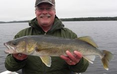 When you catch a big Walleye, big meaning over 6-pounds, there is a 95% chance that it's a female. The big females generally onlygo into theshallows in the spring where they are up along th…