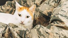 An active-duty sergeant is seeking help to relocate a stray cat and her two kittens to the US from the Middle East, reported a statement released on Wednesday from Guardians of Rescue. Bring Them Home, Bring It On, All About Cats, Middle East, Kittens, Wednesday, Animals, Pretty, Cute Kittens