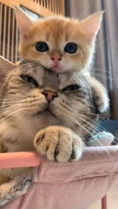 Funny Cute Cats, Cute Baby Cats, Cute Cat Gif, Cute Funny Animals, Cute Baby Animals, Cute Dogs, Cute Cat Video, Cool Cats, Baby Animals Pictures