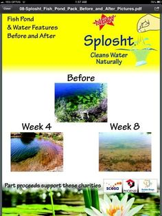 Takes few weeks to work. Then every 2 weeks application helps clean algae. Helping Cleaning, Fish Tanks, Before And After Pictures, Ponds, Water Features, Nature, Water Sources, Naturaleza, Aquariums
