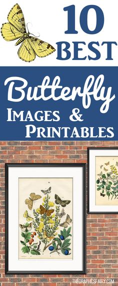 10 Best Vintage Butterfly Images and Printables! These gorgeous Butterflies are the perfect Printable Art for Wall Décor in your home. Or use the images in your Crafts, Junk Journals, Mixed Media Art or Graphics Design Projects. Graphics Fairy #FreePrintableArt