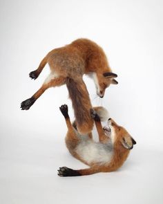 A Selection Of My Needle Felted Sculptures, Celebrating British Wildlife Needle Felted Cat, Needle Felted Animals, Felt Animals, Felted Wool, Felted Scarf, Felt Fox, Felt Birds, Dog Sculpture, Sculptures