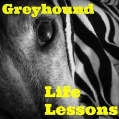 10+Life+Lessons+I've+Learned+From+Retired+Racing+Greyhounds