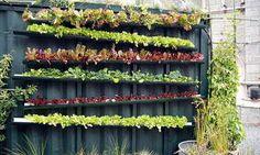 Quer ter seus próprios vegetais e frutas crescendo em casa, mas não leva jeito pra jardinagem? Veja como mudar isso!