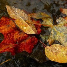 Nature Fall Autumn Leaves Dew Waterdrop #Retina #iPad #Air #wallpaper