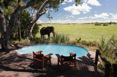 Legendary Mombo Camp, Okavango Delta, Botswana - a return trip to Africa is a must! Safari Holidays, Okavango Delta, Luxury Tents, Wildlife Safari, Crystal Clear Water, Tour Operator, African Safari, Luxury Travel, Beautiful World