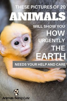 These pictures of 20 animals will show you how urgently the Earth needs your help and care Tiny Puppies, Cute Puppies, Inspirational Animal Quotes, Baby Sea Lion, Saltwater Crocodile, Baby Orangutan, Interesting Animals, Animal Facts, Find Pets
