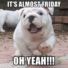 """55 """"Almost Friday"""" Memes - """"It's almost Friday, oh yeah!!!"""" Bulldog Meme, Bulldog Puppies, Cute Puppies, Bulldog Quotes, Friday Jr, Almost Friday, Friday Memes, Thursday Quotes, Animals And Pets"""