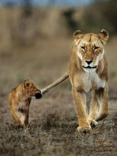 15 Animals And Their Babies That Will Brighten Your Day