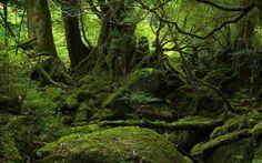 Yakushima | Yakushima Island 550x343 Yakushima Island, Japan