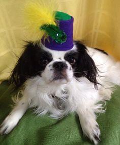 Mardi Gras Dog Fez Hat for Pets by Doginafez on Etsy