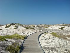 This wooden walkway winds through the bone-white dunes of Asilomar State Beach, full of promise and stretching out forever.