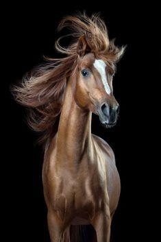 Wiebke Haas photo via slate Cheval horse chevaux hair cheveux haircut World Photography, Photography Awards, Equine Photography, Wildlife Photography, Animal Photography, Pretty Horses, Beautiful Horses, Horse Age, Captain Fantastic