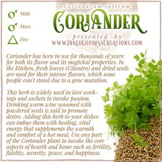 This controversial herb was known to the ancient Myceneans, who called it koriadnon. For those who enjoy its flavor, it has a spicy citrus tang; for others, it tastes like dish soap! // #kitchenwitch #love #coriander #cilantro #protection #home #warmth #fidelity #passion #healing Wiccan, Magick, Witchcraft, Coriander Cilantro, Coriander Seeds, Kitchen Witchery, Spiritual Path, Journals, Spicy