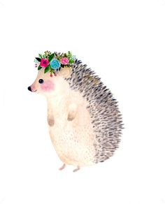 hedgehog fancy                                                       …