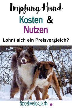 Was kostet eine Impfung? -- Lohnt sich der Preisvergleich? | Impfung | Hund| Gesundheit | thepellmellpack.de