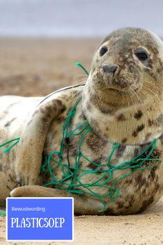 Bewustwording van de plastic soep Ocean Pollution, Plastic Pollution, Plastic Waste Recycling, Waste Art, Great Pacific Garbage Patch, Visual Literacy, Animal Protection, Environmental Art, Save The Planet