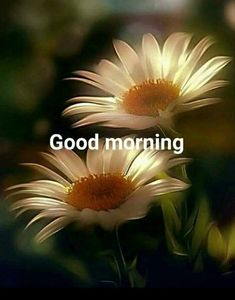 you are searching for good morning beautiful massages. The best image is available on this website to wish you good morning. Sunday Morning Wishes, Good Morning Happy Sunday, Good Morning Funny, Good Morning Greetings, Good Morning Good Night, Morning Messages, Morning Blessings, Good Morning Images Flowers, Latest Good Morning Images