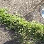 12 Πανεξυπνες Χρησεις του Ξυδιου στον Κηπο η την Αυλη σας που δεν ειχατε ποτε φανταστει και θα σας λυσουν τα Χερια!