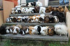 44 piggies.