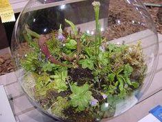 Terrarium humide de plantes carnivores