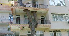 architecture-around-the-trees-fb