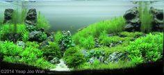 2014 AGA Aquascaping Contest - Entry #63