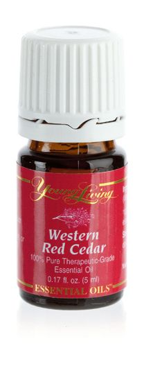 Western Red Cedar Essential Oil is a rare oil distilled from the leaves of the tree. Learn more about this unique oil here. Young Living Oils, Young Living Essential Oils, Cedar Essential Oil, Herbal Oil, Western Red Cedar, Home Remedies, Aromatherapy, Herbalism, Essentials