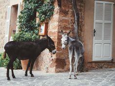 Deia, Mallorca - Spain. Cute donkeys. Photo credit instagrammers: @nerudagungoren and @michellegungoren