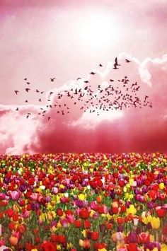5_image | SHAKI SHAKIRA | Flickr Tulip Fields, 5 Image, Hello Spring, Denmark, Tulips, Clouds, Explore, Mountains, Flowers