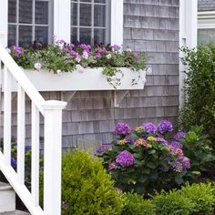 This stonecrop's rose-tinged leaves and the purple and pink blooms of phlox and verbena echo the hues of the in-ground hydrangea, tying the box to the rest of the garden. | Photo: Deborah Whitlaw Llewellyn | thisoldhouse.com