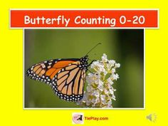 Butterfly Counting 0-20 is a quest in counting butterflies photographed in a real world setting! See the orange and black Monarch butterfly and other gorgeous butterflies in a variety of arrays up to the number 20. This huge 56 slide presentation includes everything you need ... presentation, teacher's script, activity, four worksheets, worksheet keys and a student skills assessment. This presentation is aligned to CCSS.   http://www.teacherspayteachers.com/Store/Tieplay